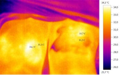 Тепловизор: два сустава