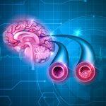 Исследователи обнаружили молекулу, влияющую на рост сосудов