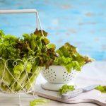 Зеленые листовые овощи защитят будущего ребенка от астмы