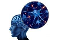Клетки мозга